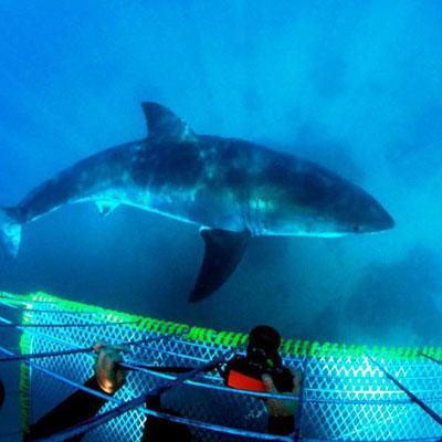 tours_sharkcage02